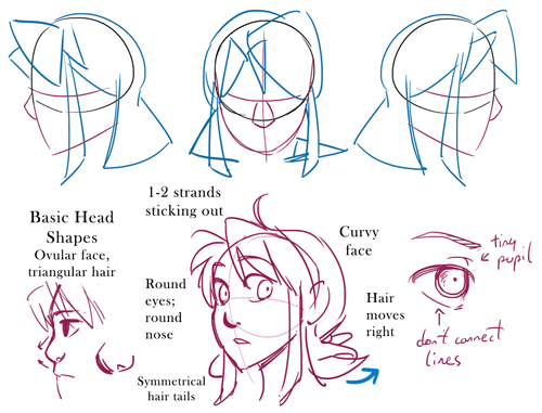 head shape and proportions